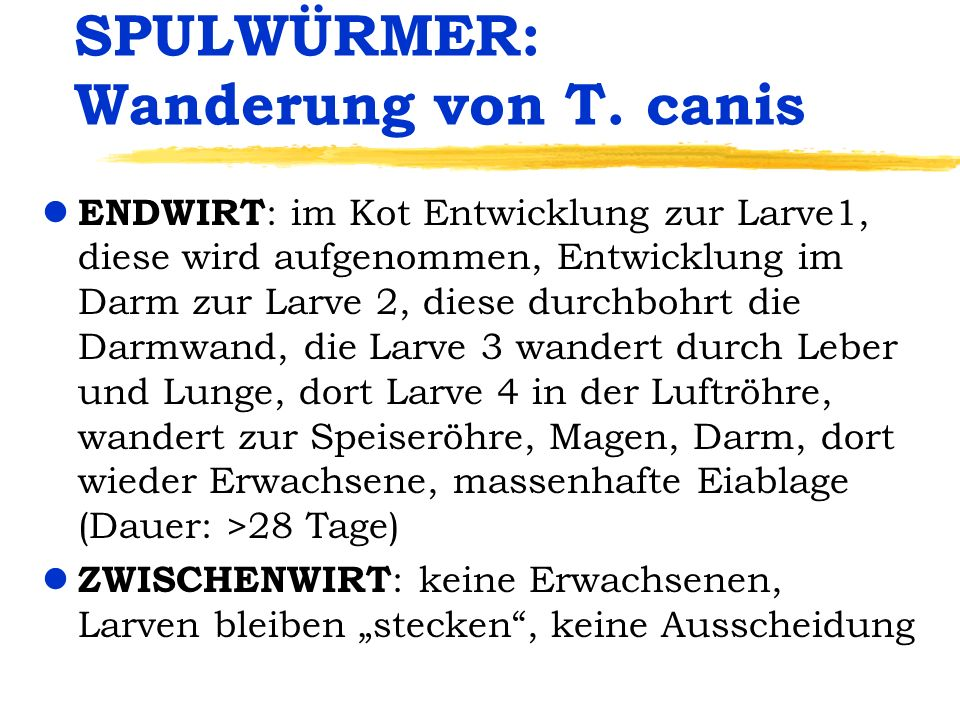 SPULWÜRMER: Wanderung von T. canis
