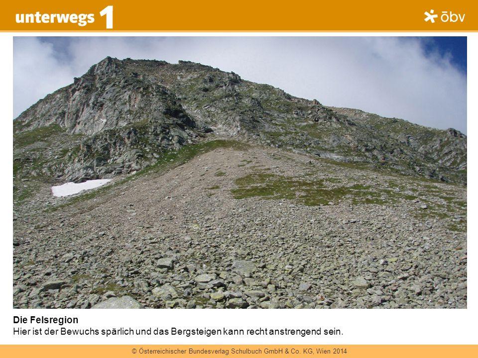 Die Felsregion Hier ist der Bewuchs spärlich und das Bergsteigen kann recht anstrengend sein.