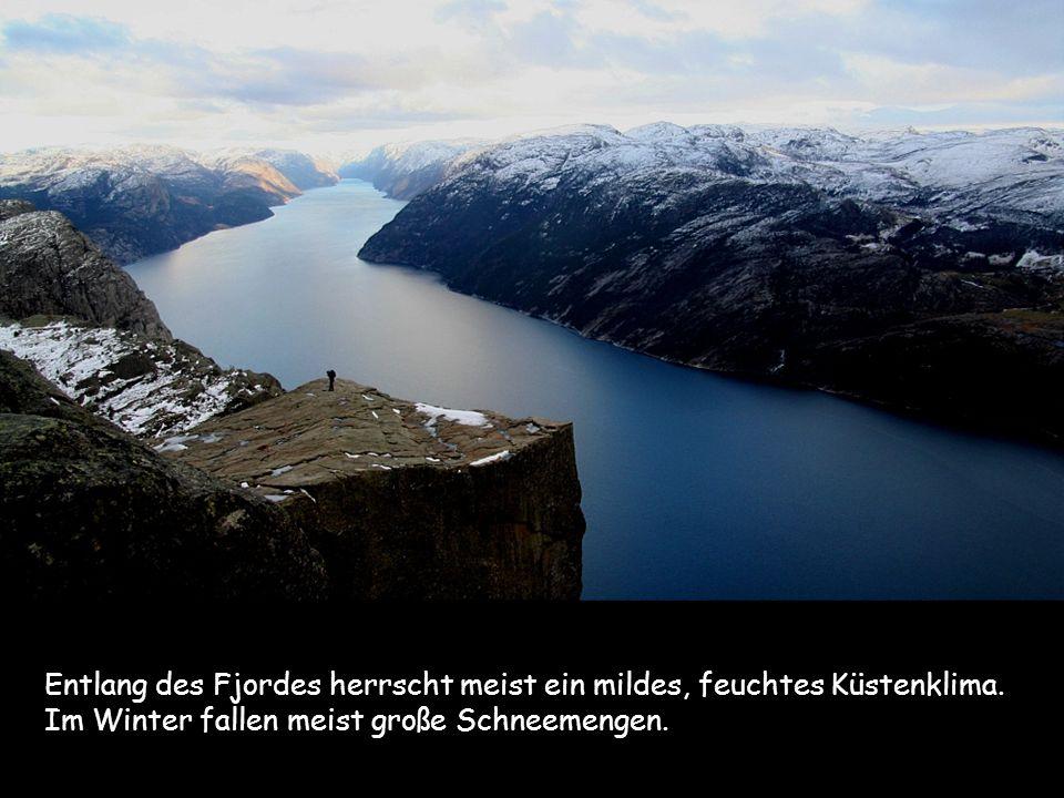 Entlang des Fjordes herrscht meist ein mildes, feuchtes Küstenklima