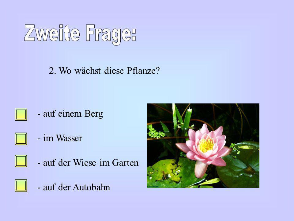 Zweite Frage: 2. Wo wächst diese Pflanze auf einem Berg im Wasser