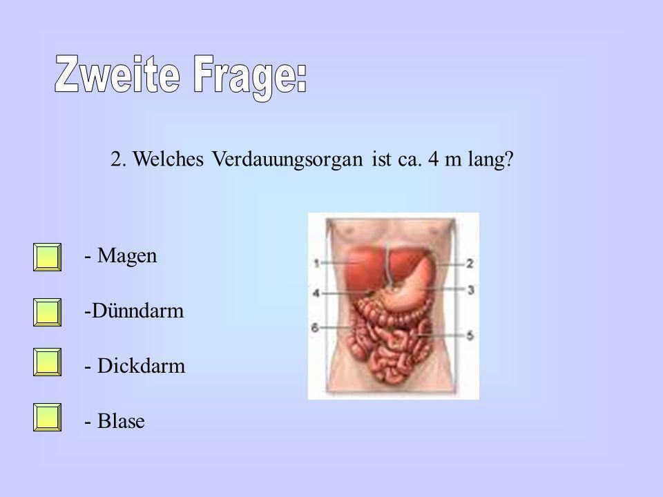 Zweite Frage: 2. Welches Verdauungsorgan ist ca. 4 m lang Magen