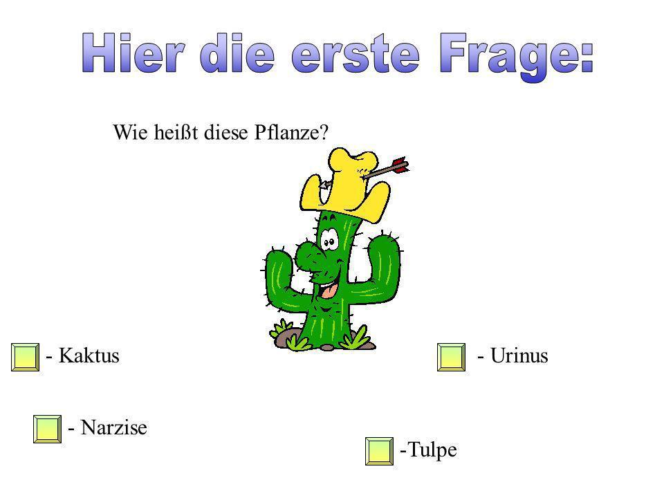 Hier die erste Frage: Wie heißt diese Pflanze - Kaktus - Urinus