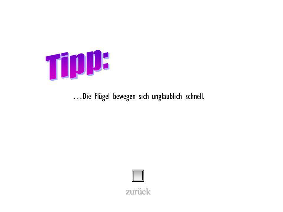Tipp: …Die Flügel bewegen sich unglaublich schnell. zurück