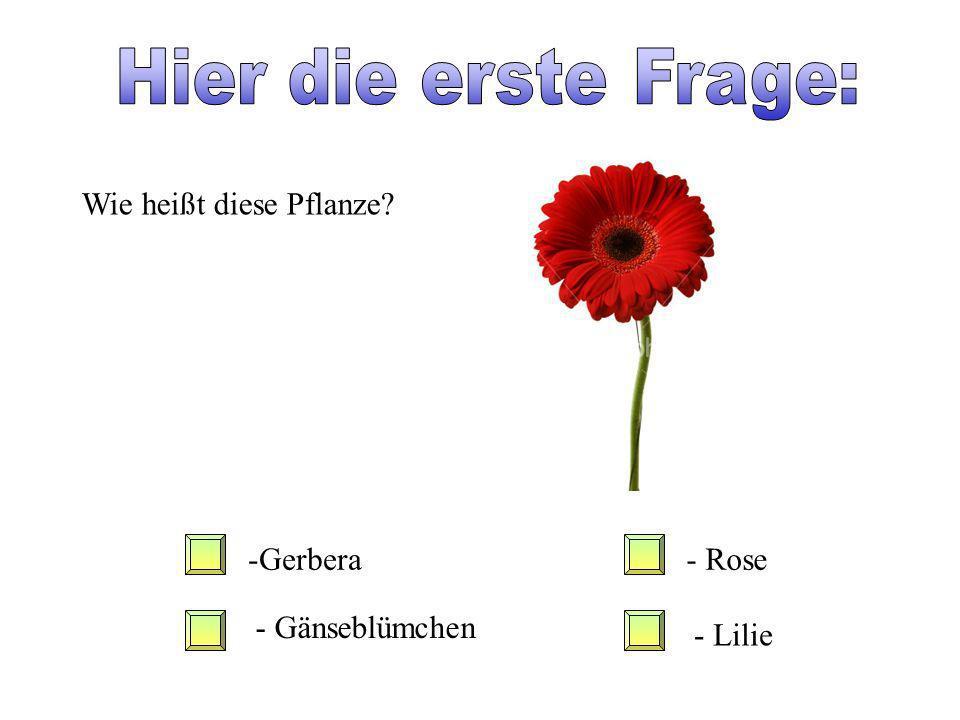 Hier die erste Frage: Wie heißt diese Pflanze Gerbera - Rose