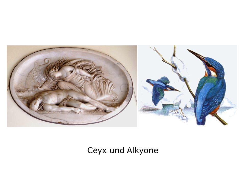 Ceyx und Alkyone