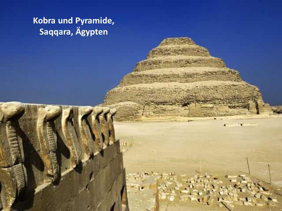 Kobra und Pyramide, Saqqara, Ägypten