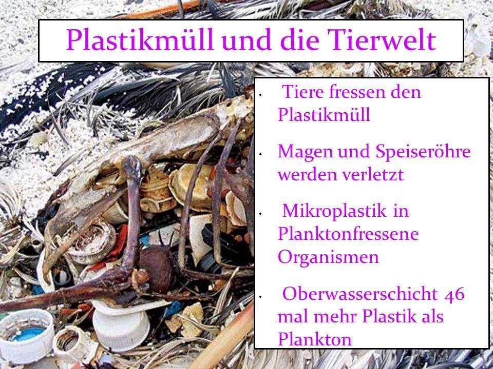 Plastikmüll und die Tierwelt