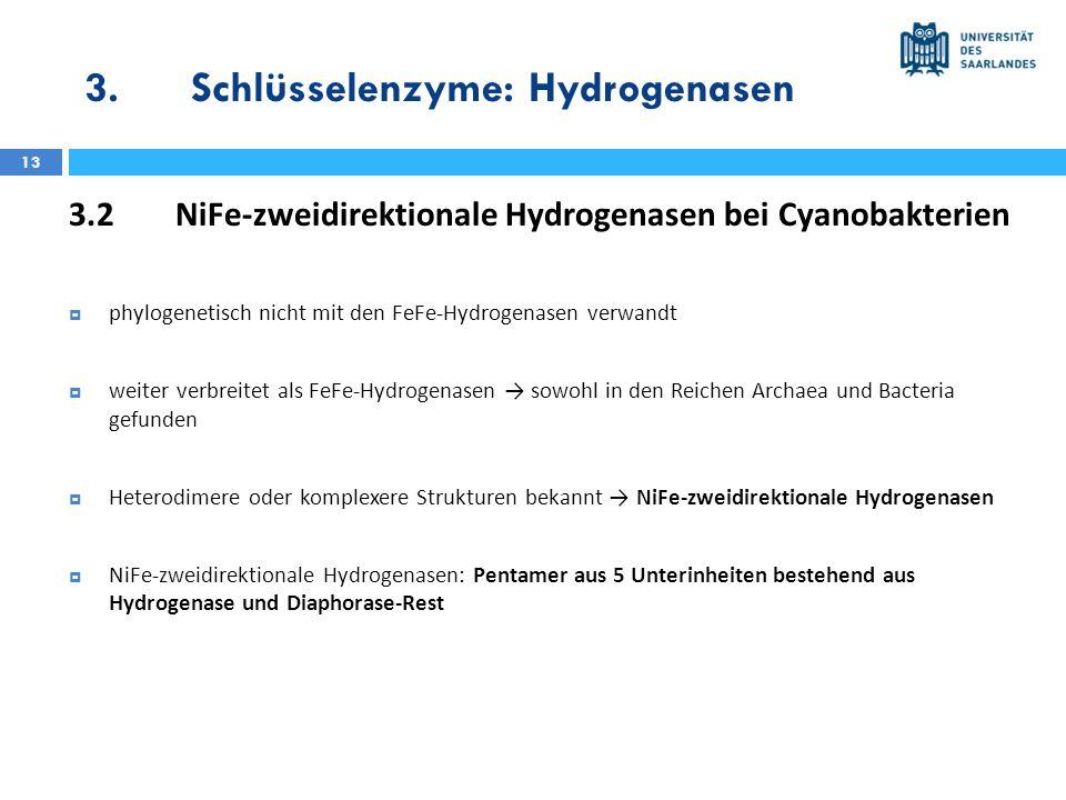 3. Schlüsselenzyme: Hydrogenasen