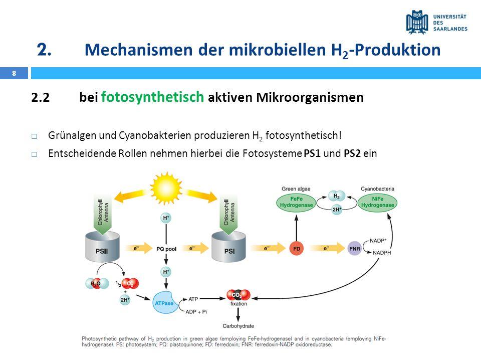 2. Mechanismen der mikrobiellen H2-Produktion