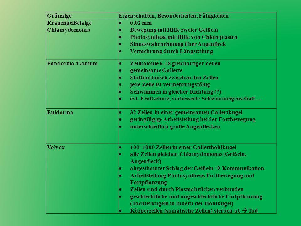 Grünalge Eigenschaften, Besonderheiten, Fähigkeiten. Kragengeißelalge. Chlamydomonas. 0,02 mm. Bewegung mit Hilfe zweier Geißeln.