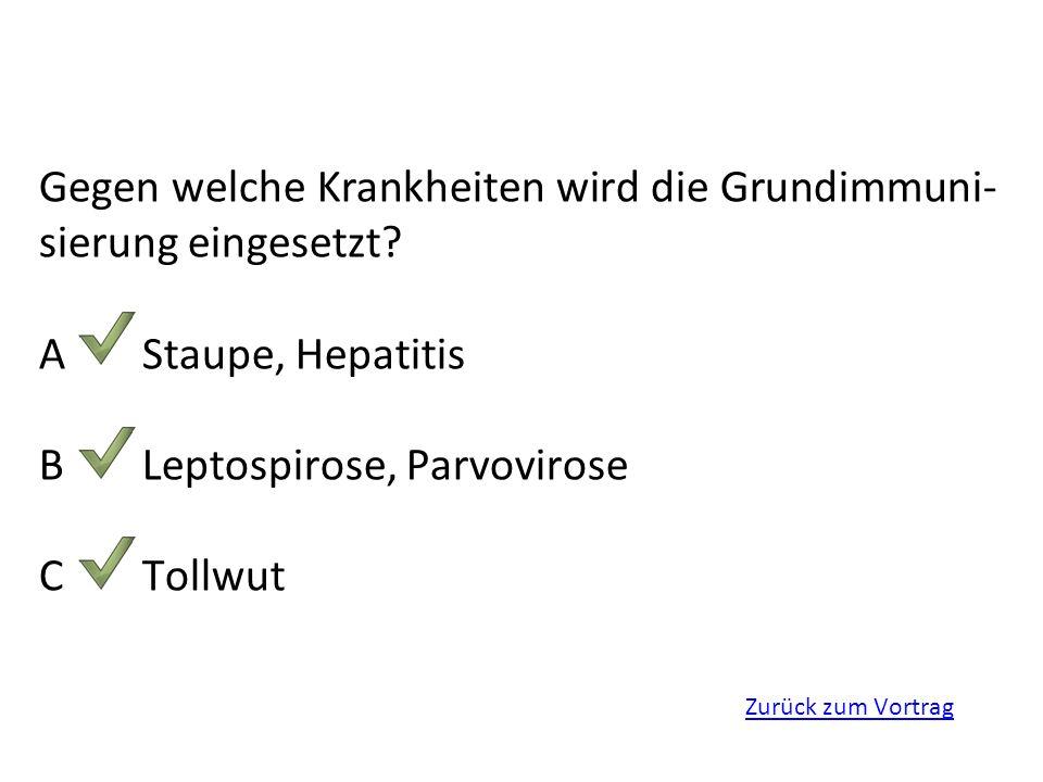 Gegen welche Krankheiten wird die Grundimmuni-sierung eingesetzt