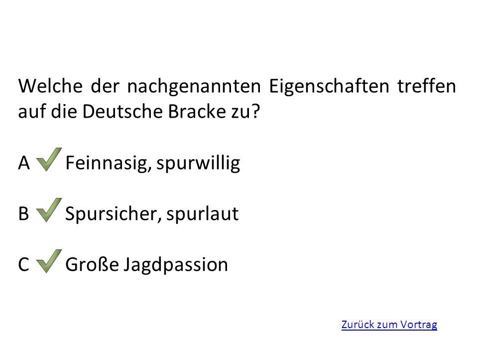 A Feinnasig, spurwillig B Spursicher, spurlaut C Große Jagdpassion