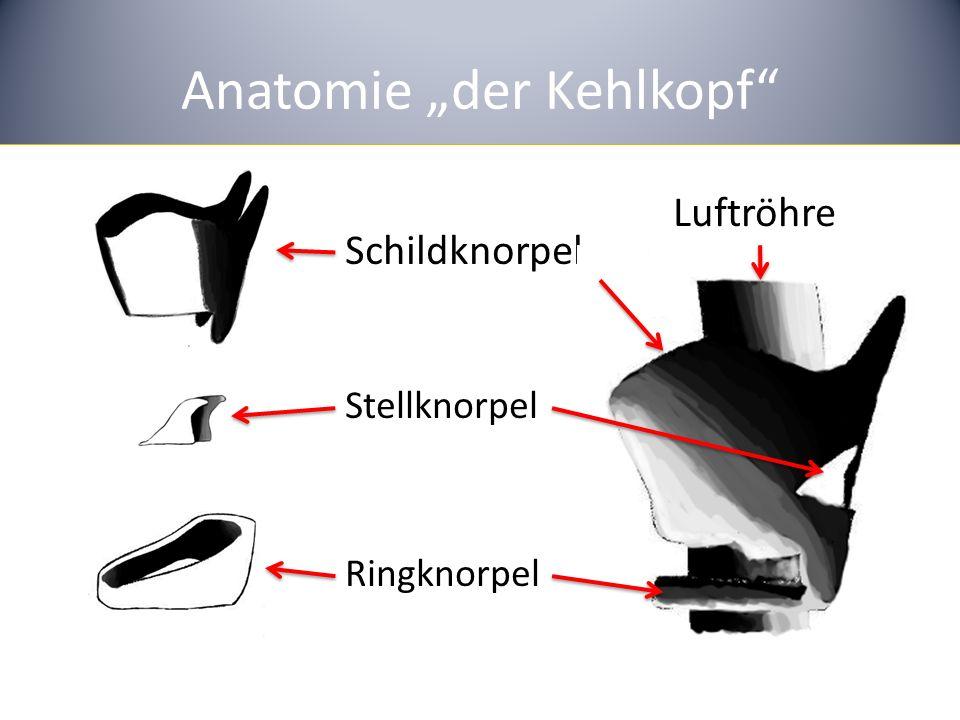 """Anatomie """"der Kehlkopf"""