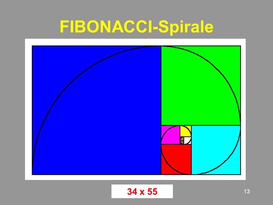 FIBONACCI-Spirale 34 x 55
