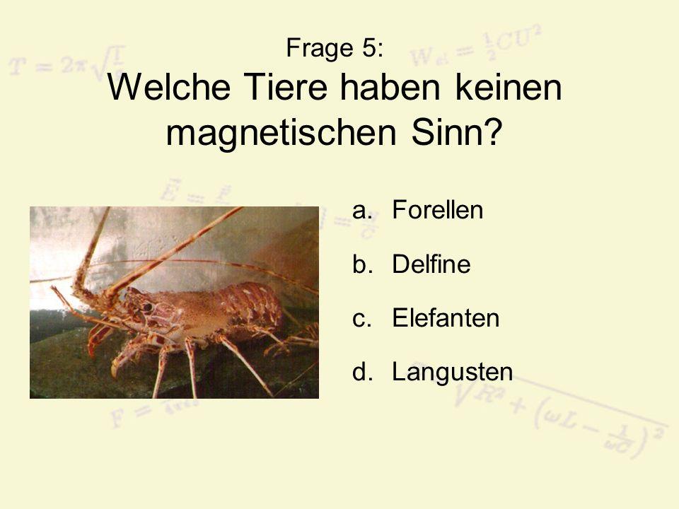 Frage 5: Welche Tiere haben keinen magnetischen Sinn