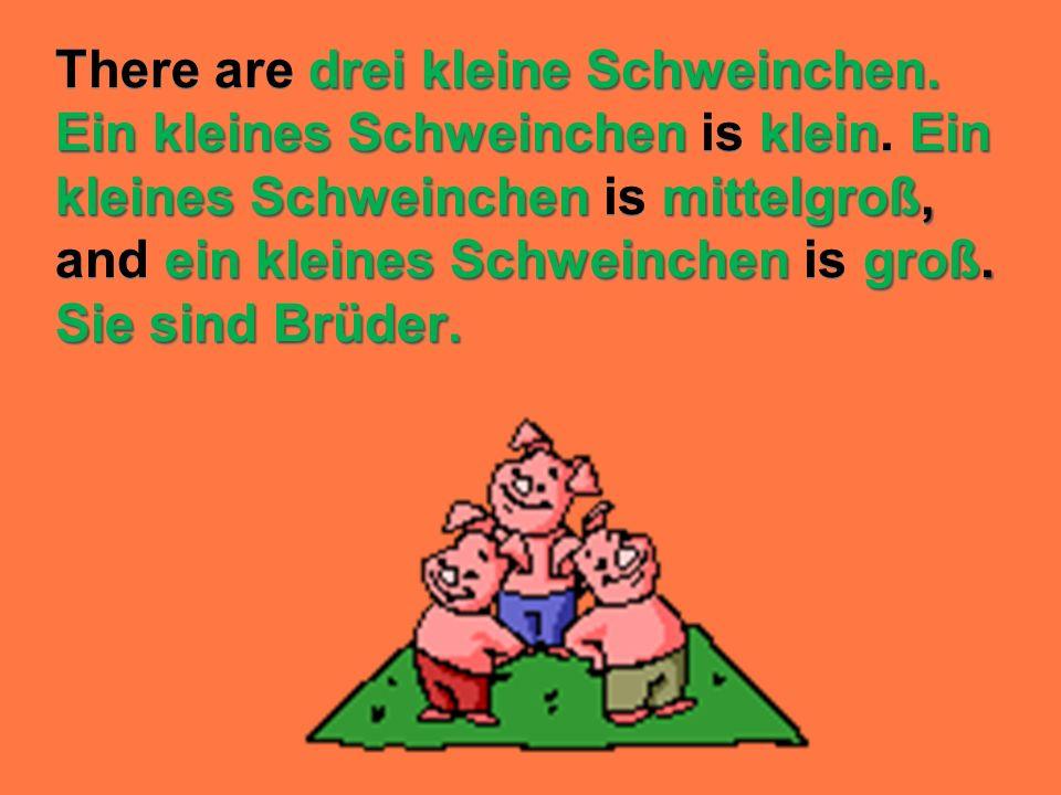 There are drei kleine Schweinchen. Ein kleines Schweinchen is klein