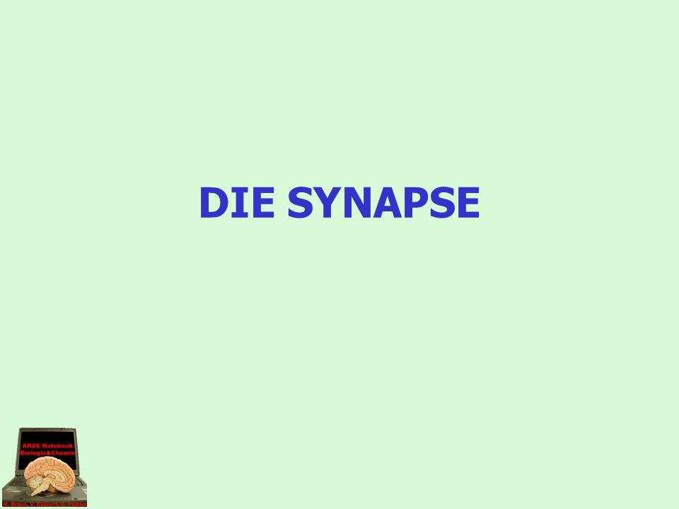 DIE SYNAPSE