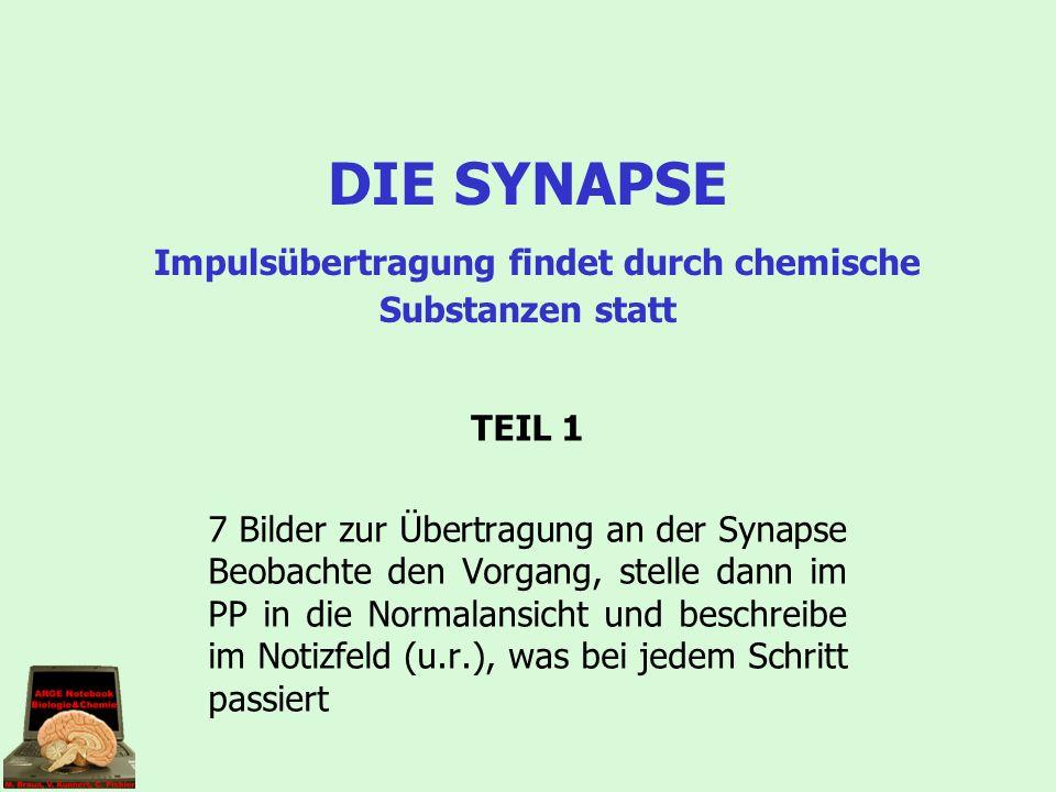 DIE SYNAPSE Impulsübertragung findet durch chemische Substanzen statt