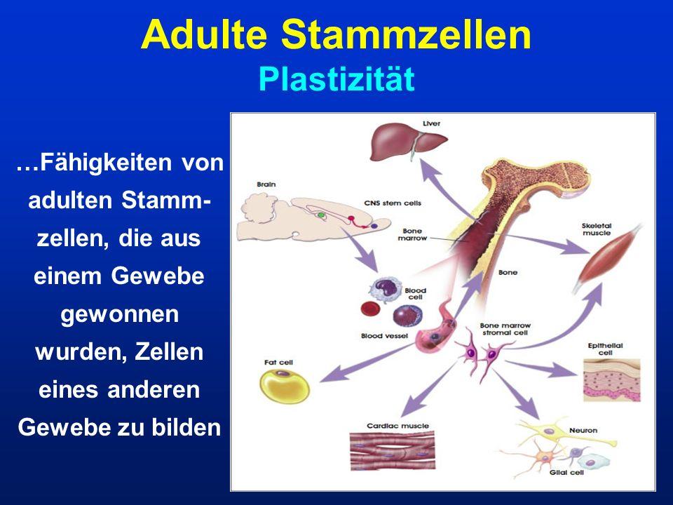 Adulte Stammzellen Plastizität