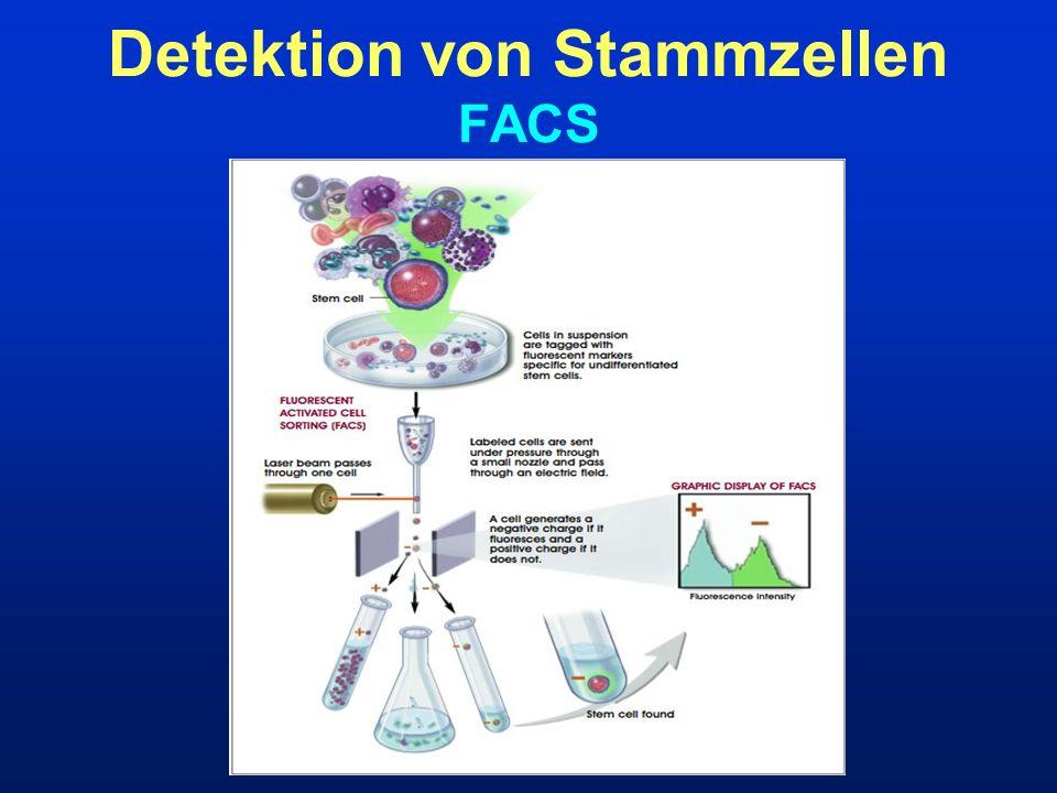 Detektion von Stammzellen FACS
