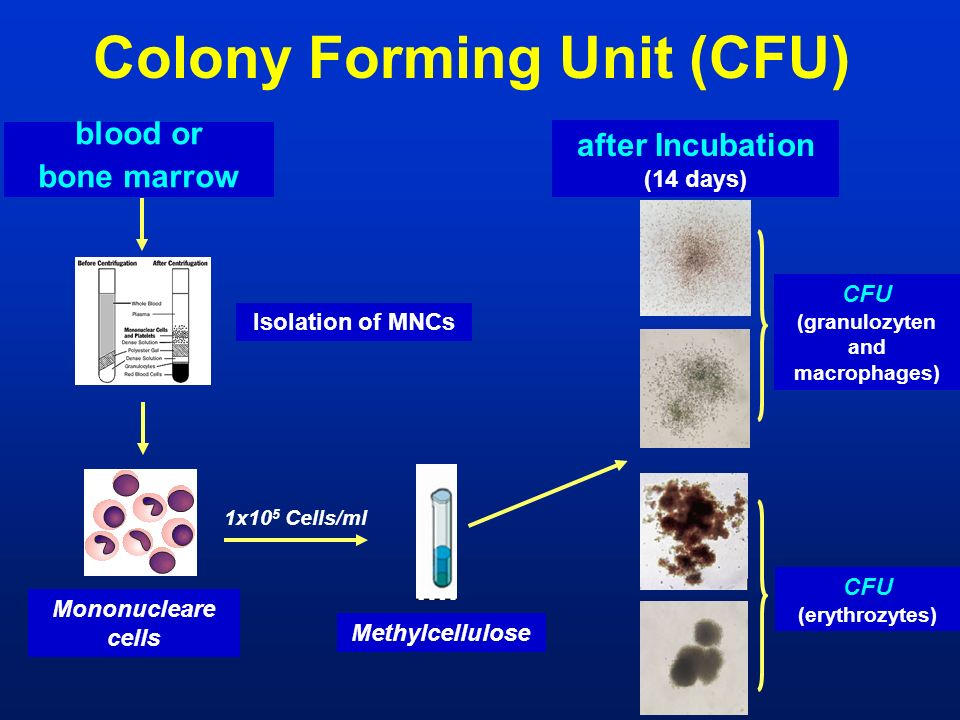 Colony Forming Unit (CFU)
