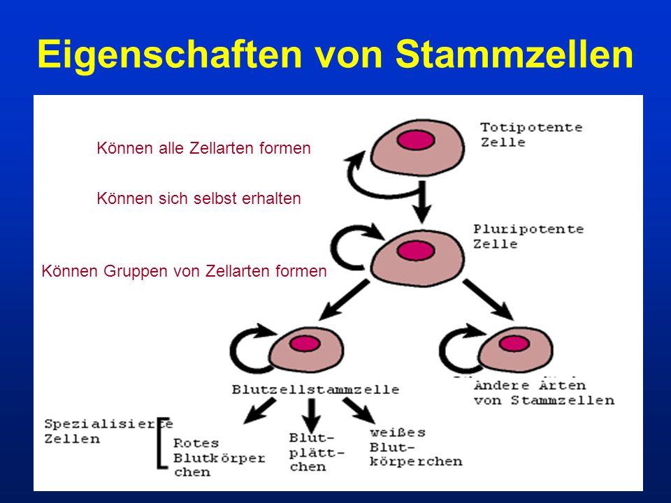 Eigenschaften von Stammzellen