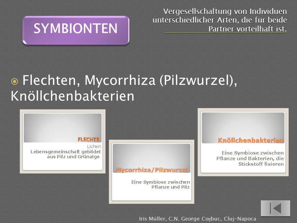 Flechten, Mycorrhiza (Pilzwurzel), Knöllchenbakterien