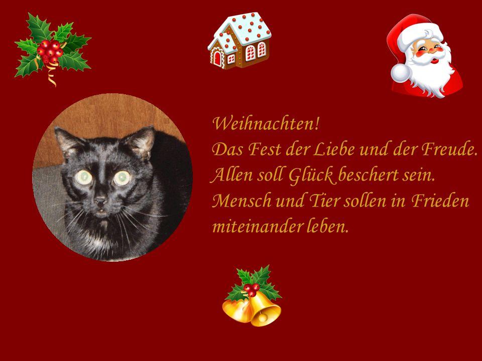 Weihnachten! Das Fest der Liebe und der Freude. Allen soll Glück beschert sein. Mensch und Tier sollen in Frieden.
