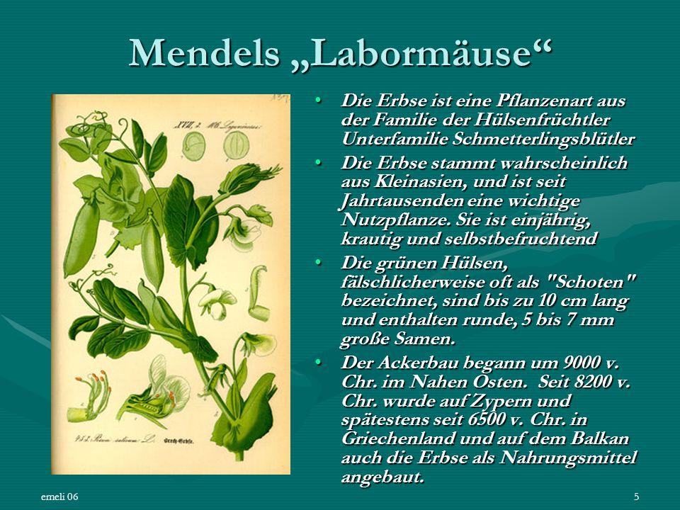 """Mendels """"Labormäuse Die Erbse ist eine Pflanzenart aus der Familie der Hülsenfrüchtler Unterfamilie Schmetterlingsblütler."""