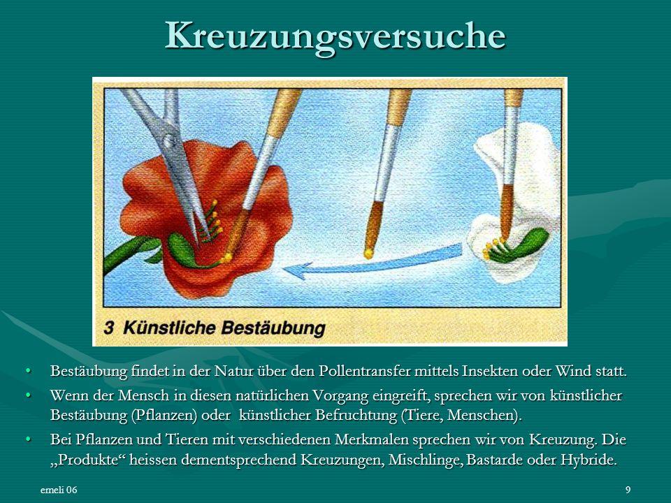 Kreuzungsversuche Bestäubung findet in der Natur über den Pollentransfer mittels Insekten oder Wind statt.