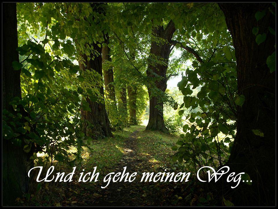 Und ich gehe meinen Weg…