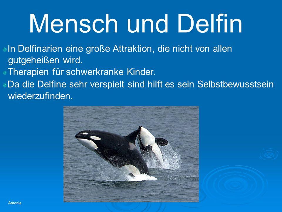 Mensch und Delfin In Delfinarien eine große Attraktion, die nicht von allen. gutgeheißen wird. Therapien für schwerkranke Kinder.