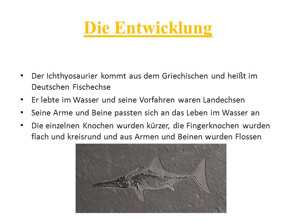 Die Entwicklung Der Ichthyosaurier kommt aus dem Griechischen und heißt im Deutschen Fischechse.