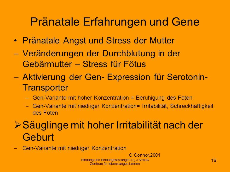 Pränatale Erfahrungen und Gene