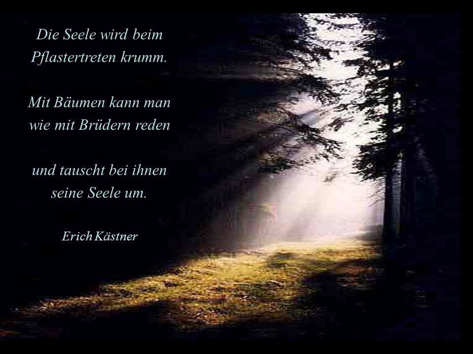 Die Seele wird beim Pflastertreten krumm. Mit Bäumen kann man