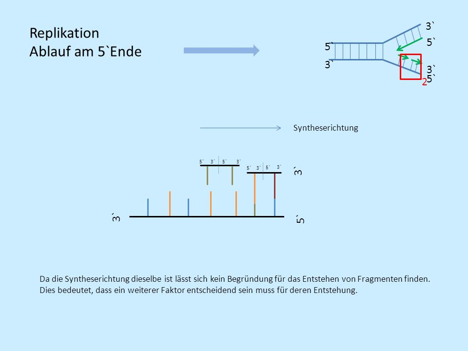 Replikation Ablauf am 5`Ende 3` 5` 2 3` 3` 5` Syntheserichtung