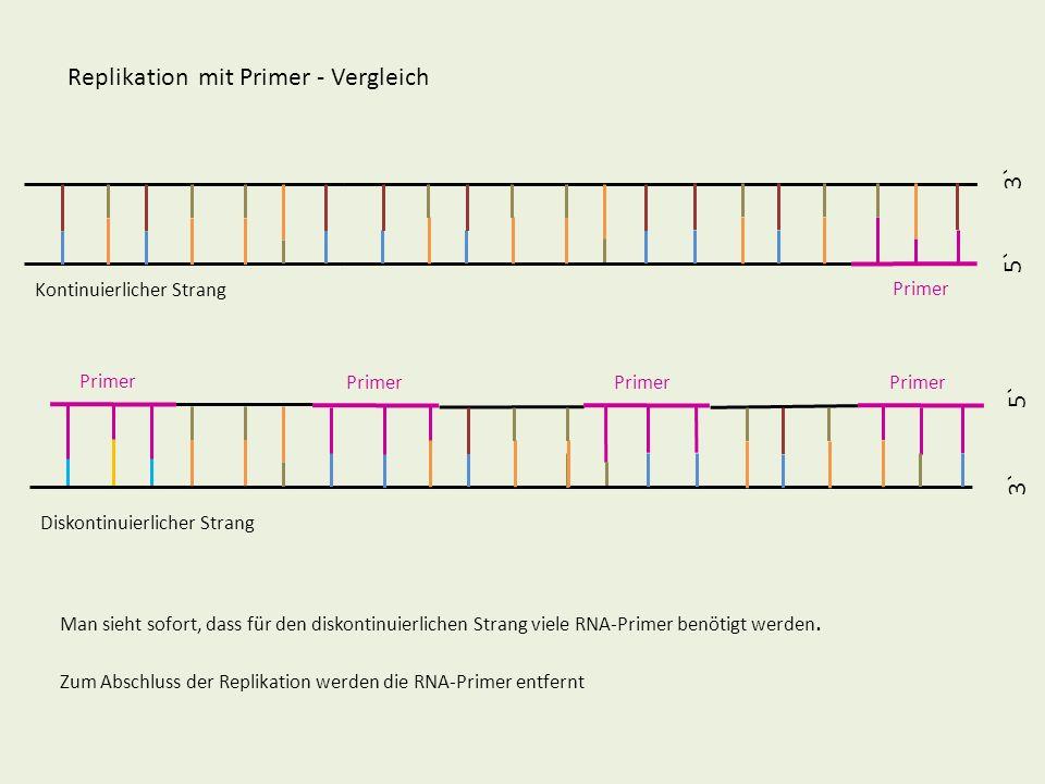 Replikation mit Primer - Vergleich