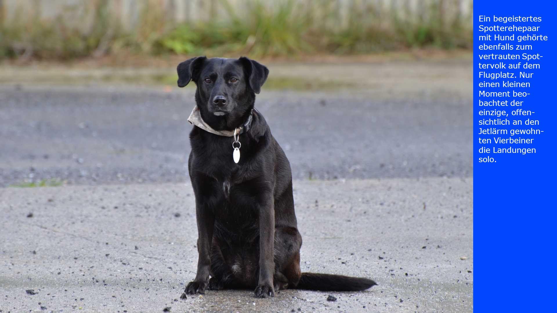 Ein begeistertes Spotterehepaar mit Hund gehörte ebenfalls zum vertrauten Spot-tervolk auf dem Flugplatz.