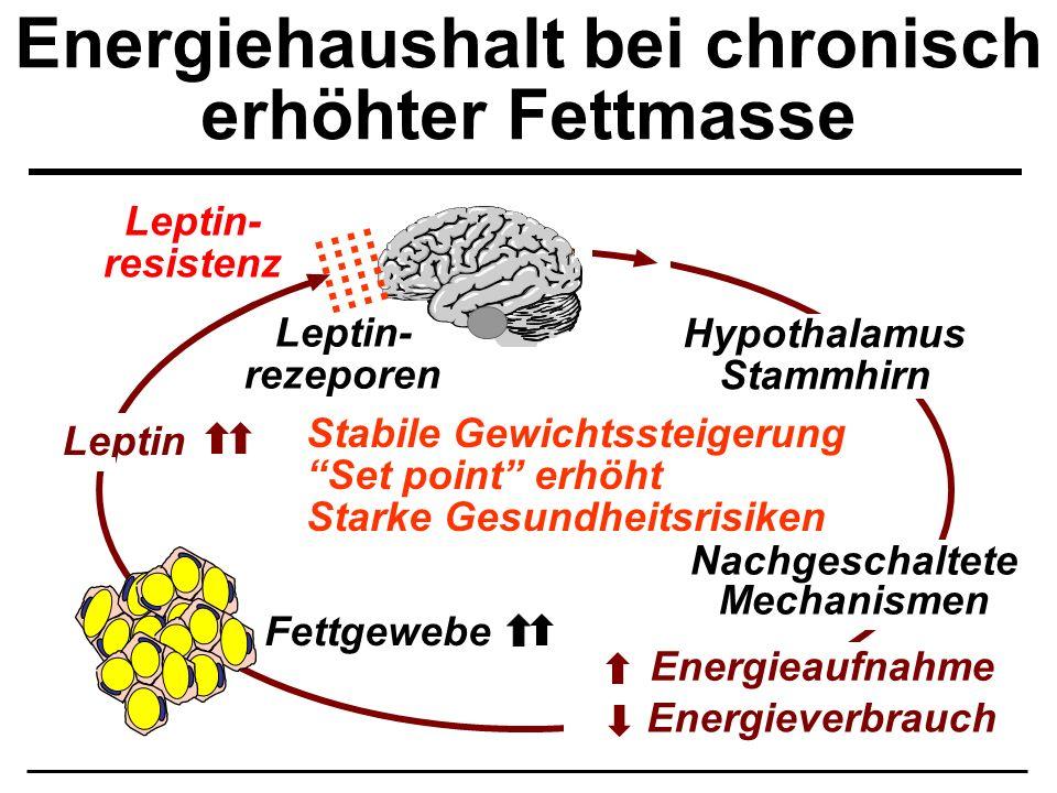Energiehaushalt bei chronisch erhöhter Fettmasse