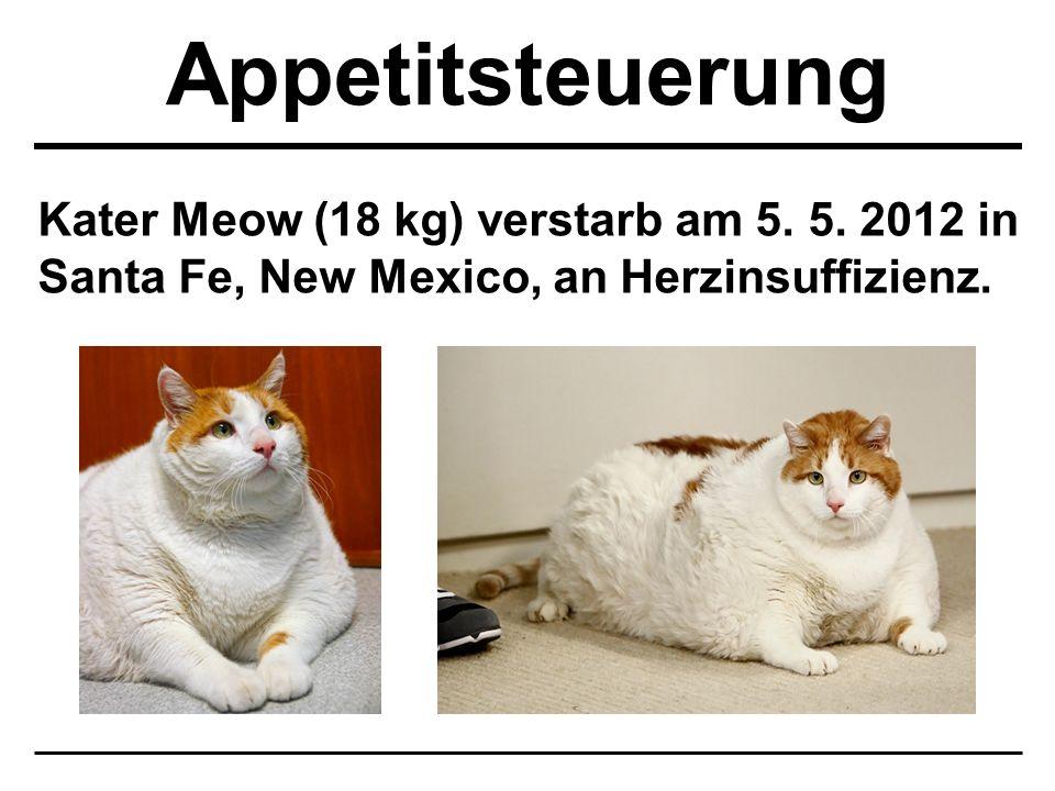 Appetitsteuerung Kater Meow (18 kg) verstarb am 5.