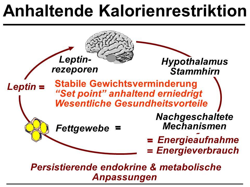 Anhaltende Kalorienrestriktion