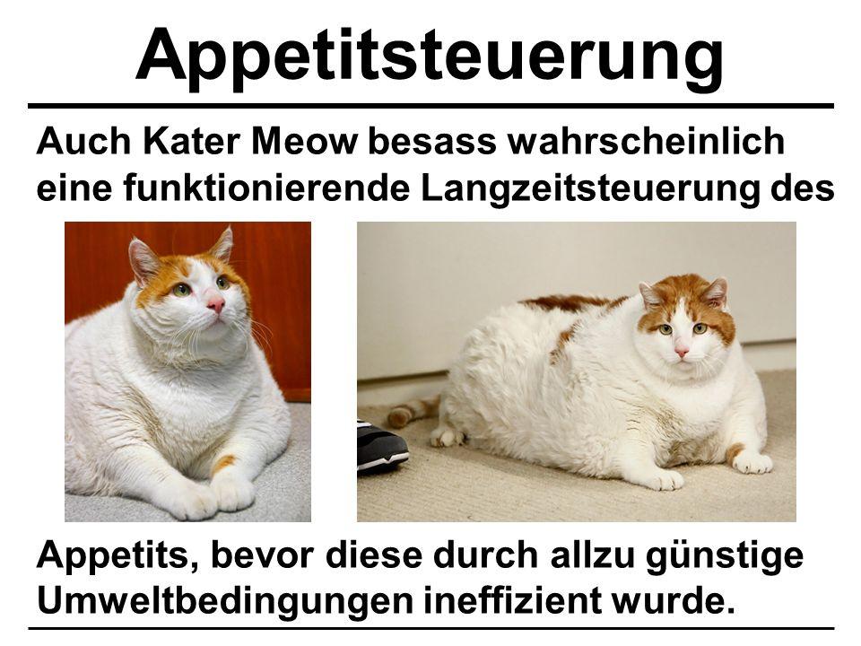 Appetitsteuerung Auch Kater Meow besass wahrscheinlich eine funktionierende Langzeitsteuerung des.