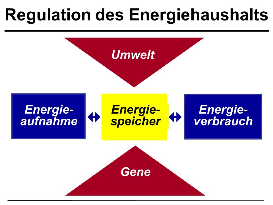 Regulation des Energiehaushalts