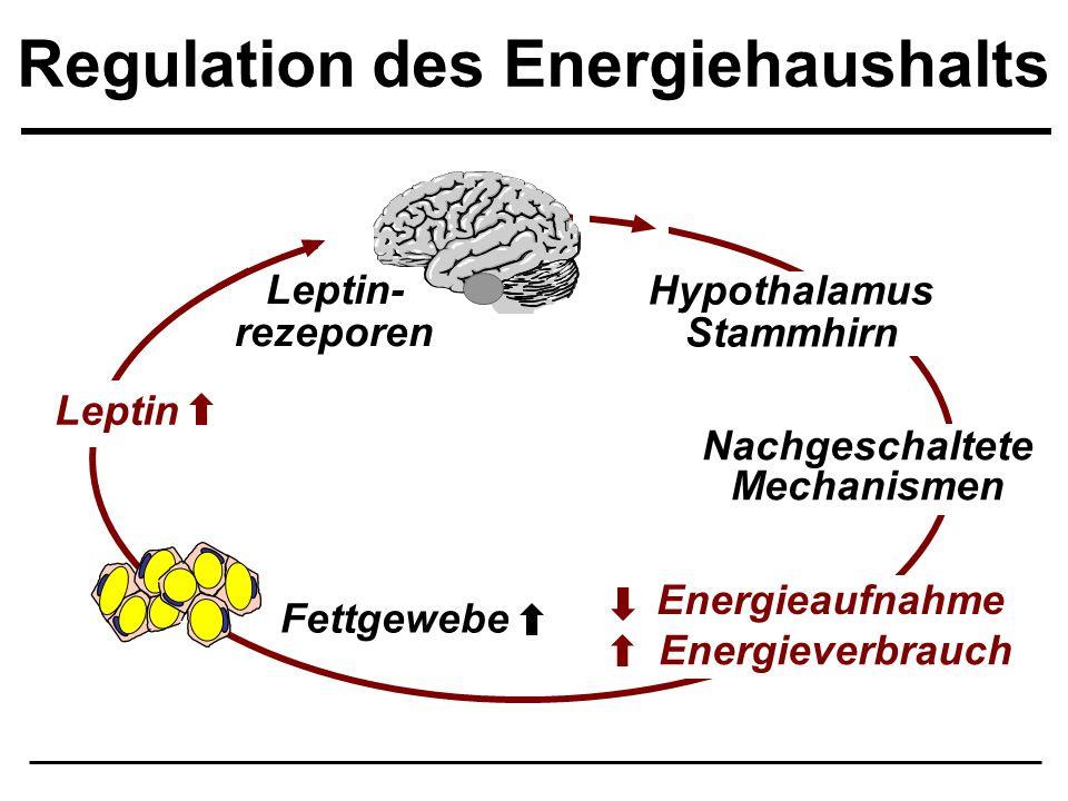 Regulation des Energiehaushalts Nachgeschaltete Mechanismen