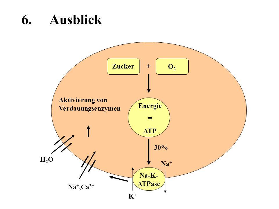6. Ausblick Zucker + O2 Aktivierung von Verdauungsenzymen Energie =