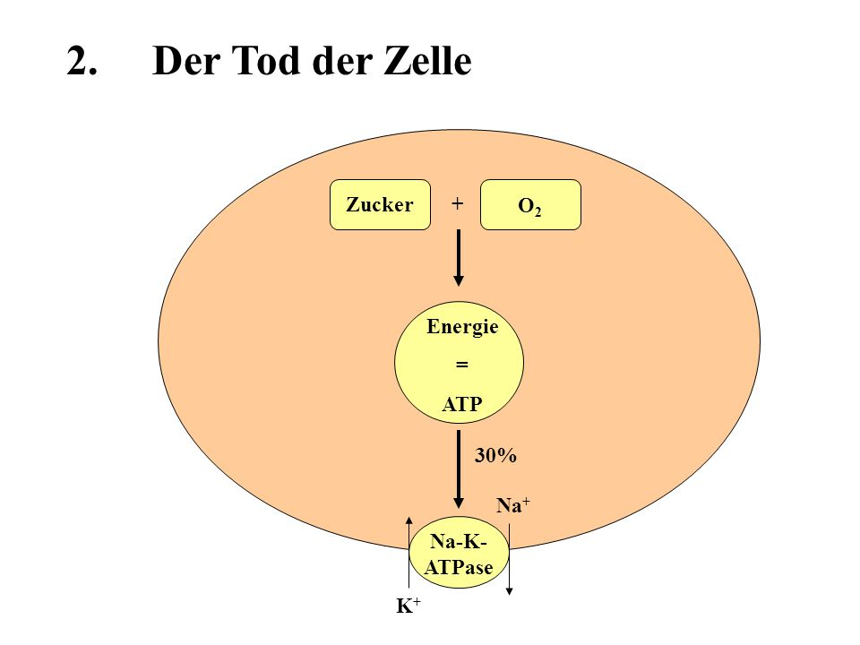 2. Der Tod der Zelle Zucker + O2 Energie = ATP 30% Na+ Na-K- ATPase K+