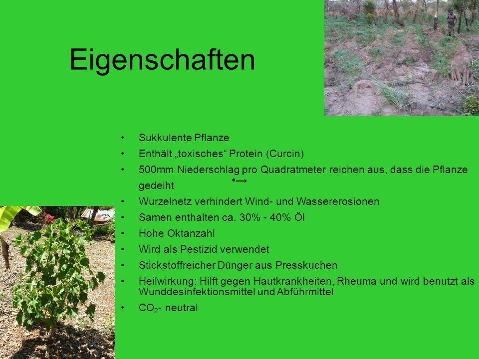Eigenschaften → Sukkulente Pflanze