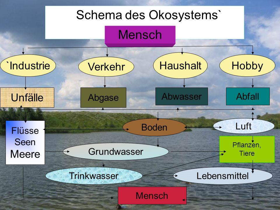 Schema des Okosystems`