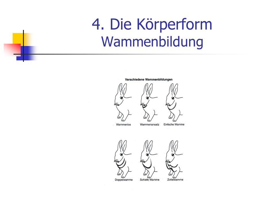 4. Die Körperform Wammenbildung
