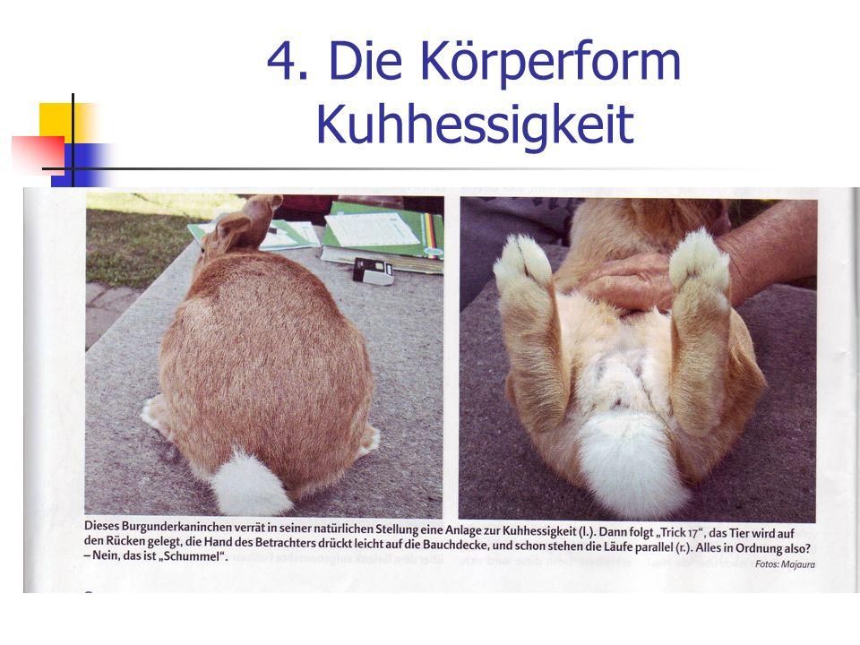 4. Die Körperform Kuhhessigkeit